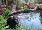 Thiết kế hồ cá koi đẹp