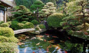 Thiết kế hồ cá Koi mang phong cách Nhật Bản