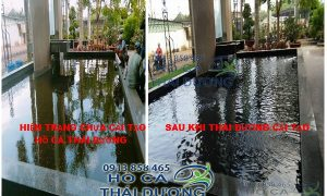 Trước và sau khi cải tạo lọc hồ cá koi