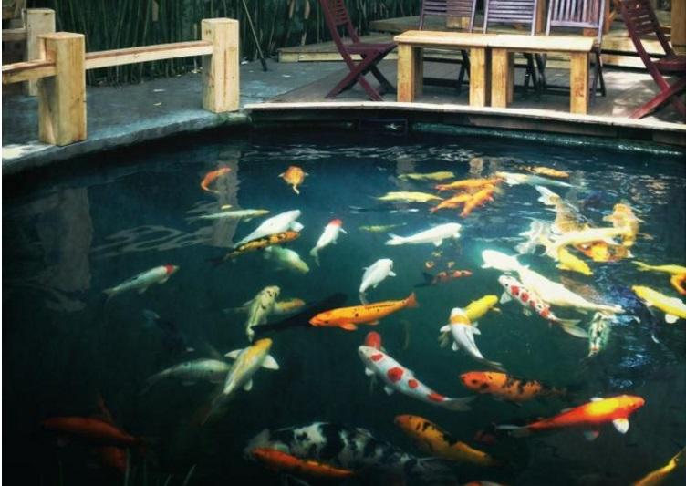 thiết kế hồ cá koi tại đà nẵng