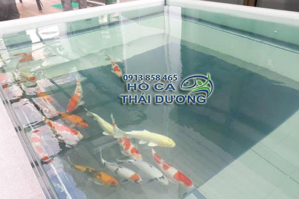 Thả cá cho hồ cá koi quận 2