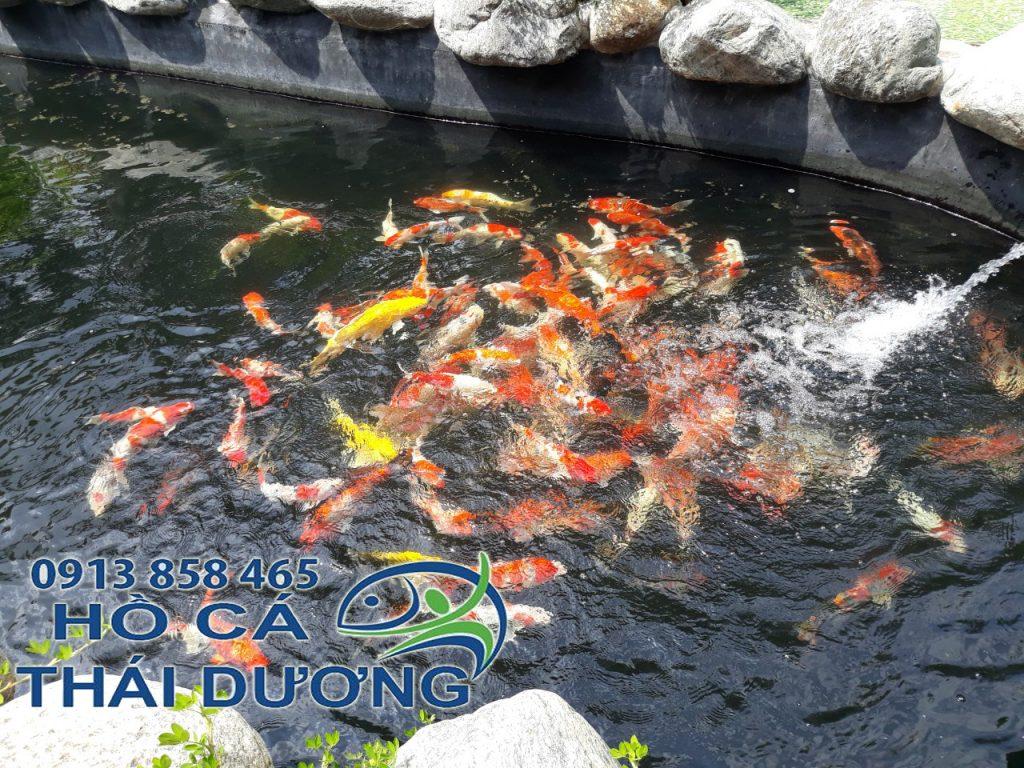 Hồ cá koi Thái Dương